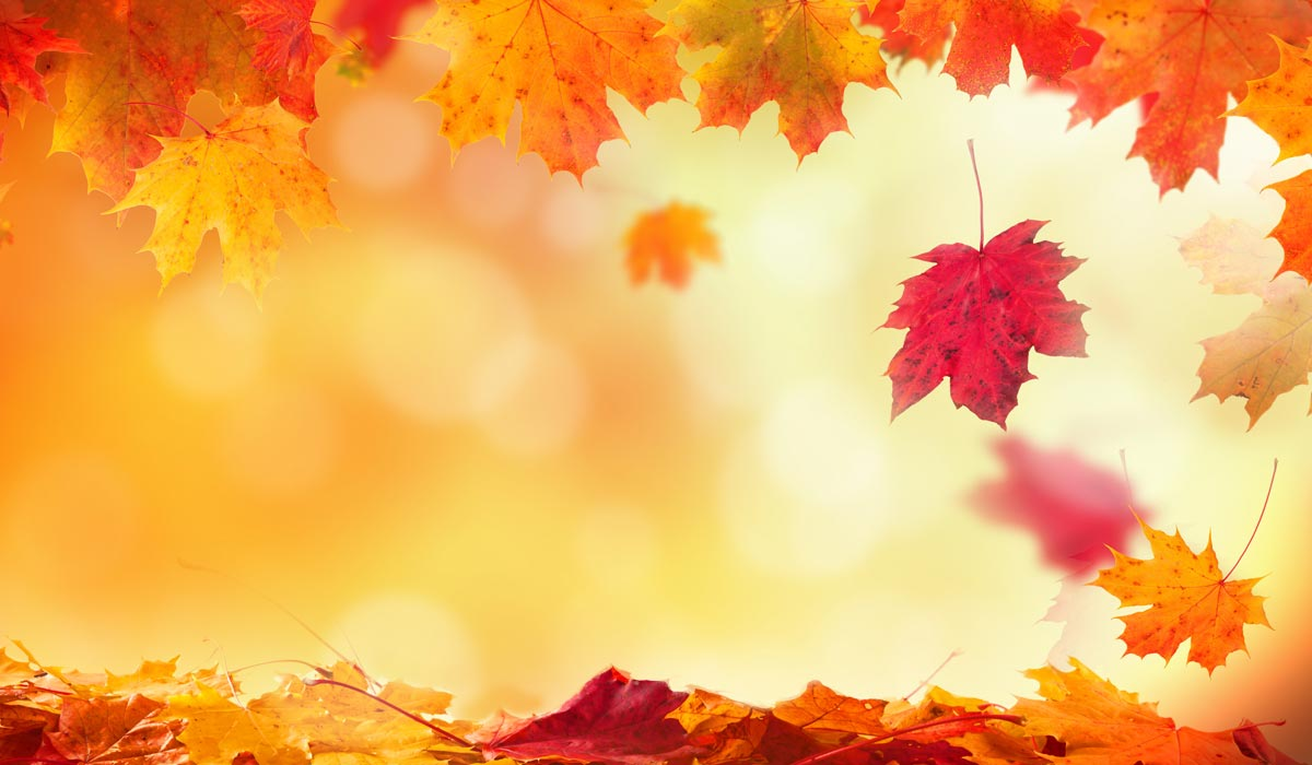 fall-special-hm-background